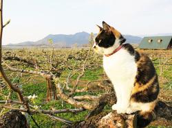 ラフ畑とネコ