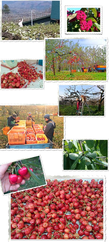 農園画像23