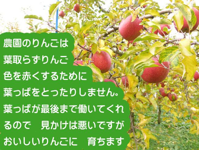 葉取らずりんご畑650