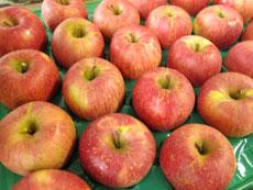 ふじりんご緑の穴230