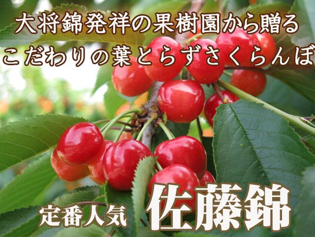 山形の佐藤錦トップ650